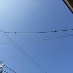 電線の鳥よけ